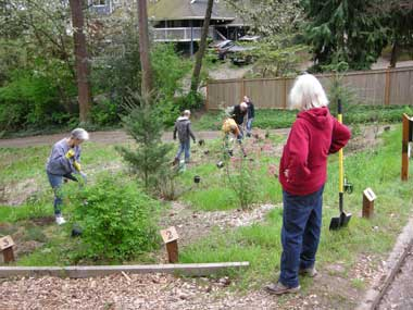 The CHRP team couldn't let others do all of the re-planting! We focused on the slope next to the back driveway.