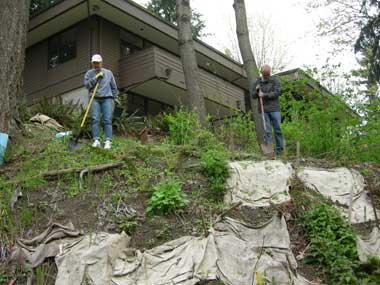 We made sure to plant some of the plants on the steep hillside, to help continue its recovery.