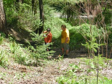 We also had a good balance of invasive species removal and planting native species.