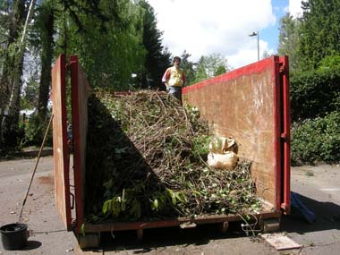 As usual, with any major event we had plenty of Himalayan blackberry and English ivy to remove.